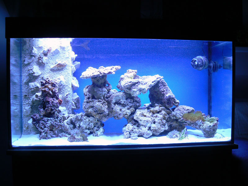 meine 200l aquarium forum. Black Bedroom Furniture Sets. Home Design Ideas